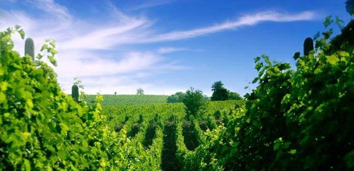 マケドニアのワイナリー、ぶどう畑